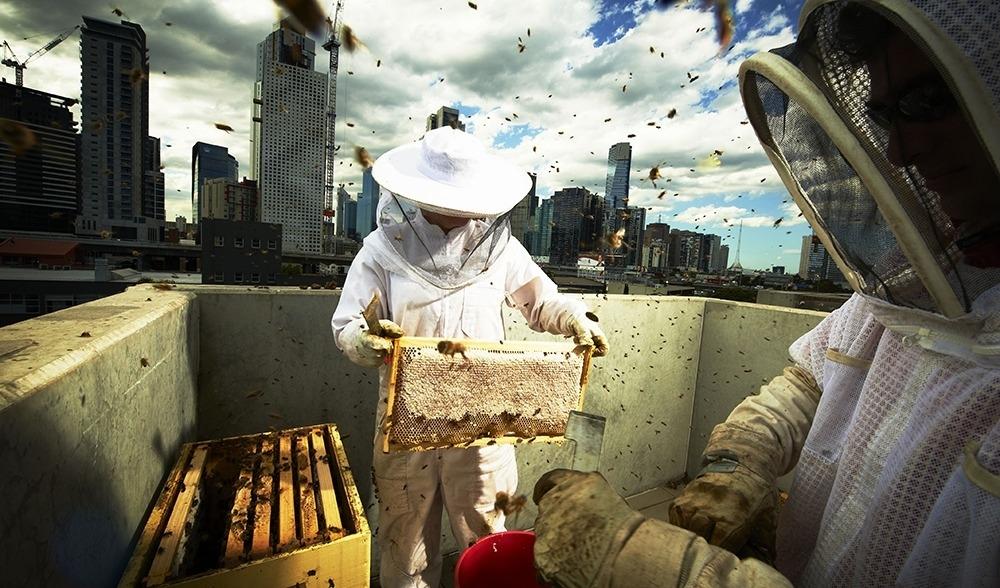 Bijen & imkers op daken - cover