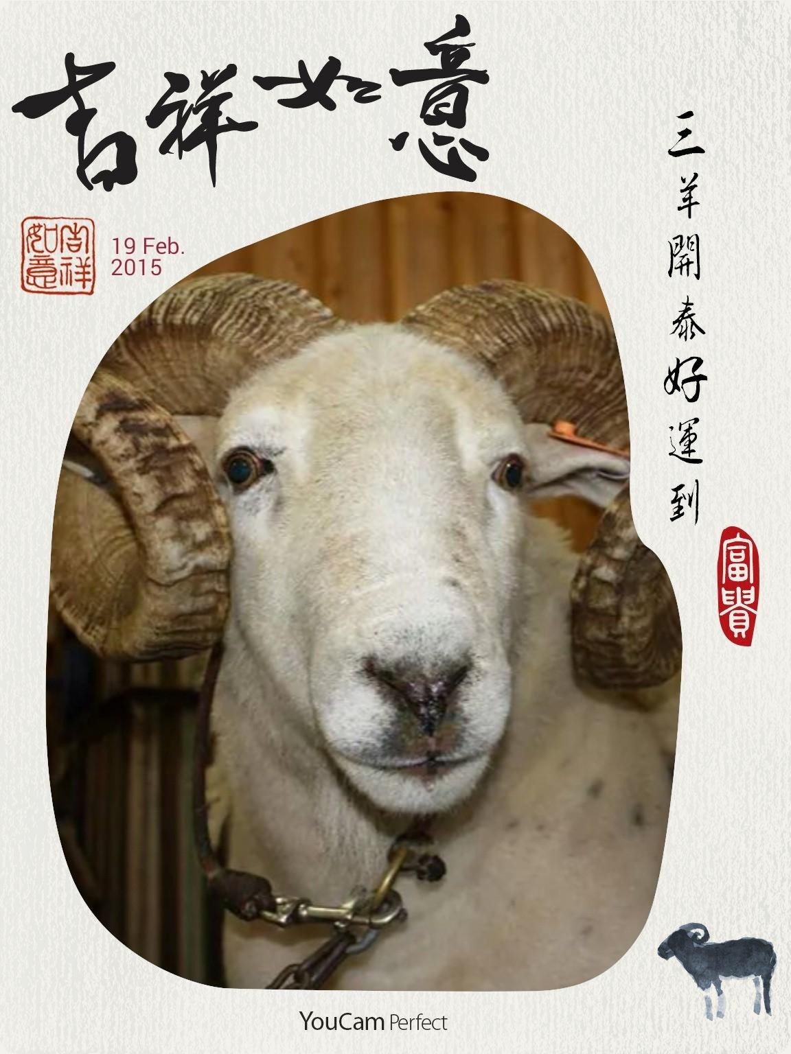 【羊年除夕•揚眉吐氣】 2015/2/18(三) 今日是除夕,邁入中國農曆羊年前一日,應景的、不應景的,在屬於中國人的世界裡各自表述。 脫離封建一世紀又四個年頭,套句俗俚:日日難當日日當,年年捱過年年過,日子再困頓,年,還是要過的。 么弟早數月前便在四海一家訂了兩桌年菜,今晚六時開席圍桌吃年夜飯。 母親生了七個孩子:三女四男,我是老大,裡裡外外廿二口,老父民國82年已回天家,媽媽過了年就足滿86,退化到連自己都不認得,只癡癡的看著她揣在懷中奶大的七個寶貝,在日升起落中倒數計時。 她從來不期待兒女如何揚眉吐氣光宗耀祖,只一心祈禱我們個個平安健康快樂幸福。 然而我卻是那使她首先掛心失望的,小我兩歲的妹子也好不過哪兒去,各在自己選擇的婚姻中受熬練。我以斷尾求生自保,妹子則咬緊牙關續熬,苦笑、無言是我們共同的符碼,過羊年,大妹也耳順了,那聽慣了的咆哮如晴空乾雷,震不斷她柔細羊腸的愛子心肝,我實實佩服妹子的堅毅勇敢。 羊有眉乎?緊閉的唇一點看不出有吐氣之兆,我又何能附會一句吉祥話,做為今晚開席前的序語? 但願蒙主選召重生的兒子能起而領下年夜飯前地祈福禱告大任,便算圓圓滿滿地過了羊年了。