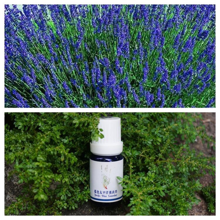New Zealand S+ Lavender Essential Oil - Magazine cover