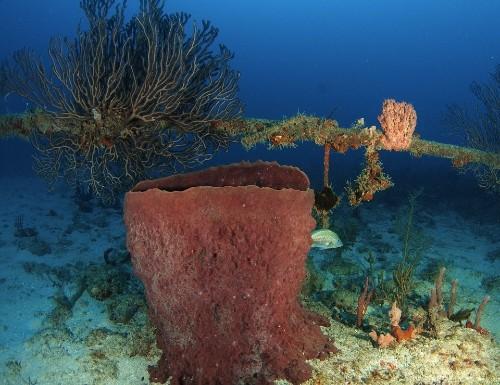 The Underwater Internet