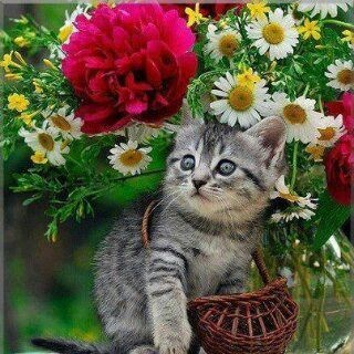 Ich bring dir den Frühling