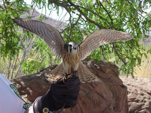 Can Birds Be Trained To Bring Down Drones?
