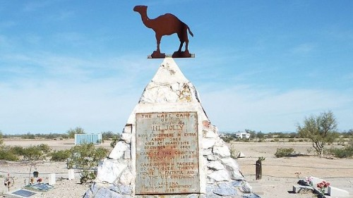 One of America's first Syrian immigrants helped conquer the West — with camels