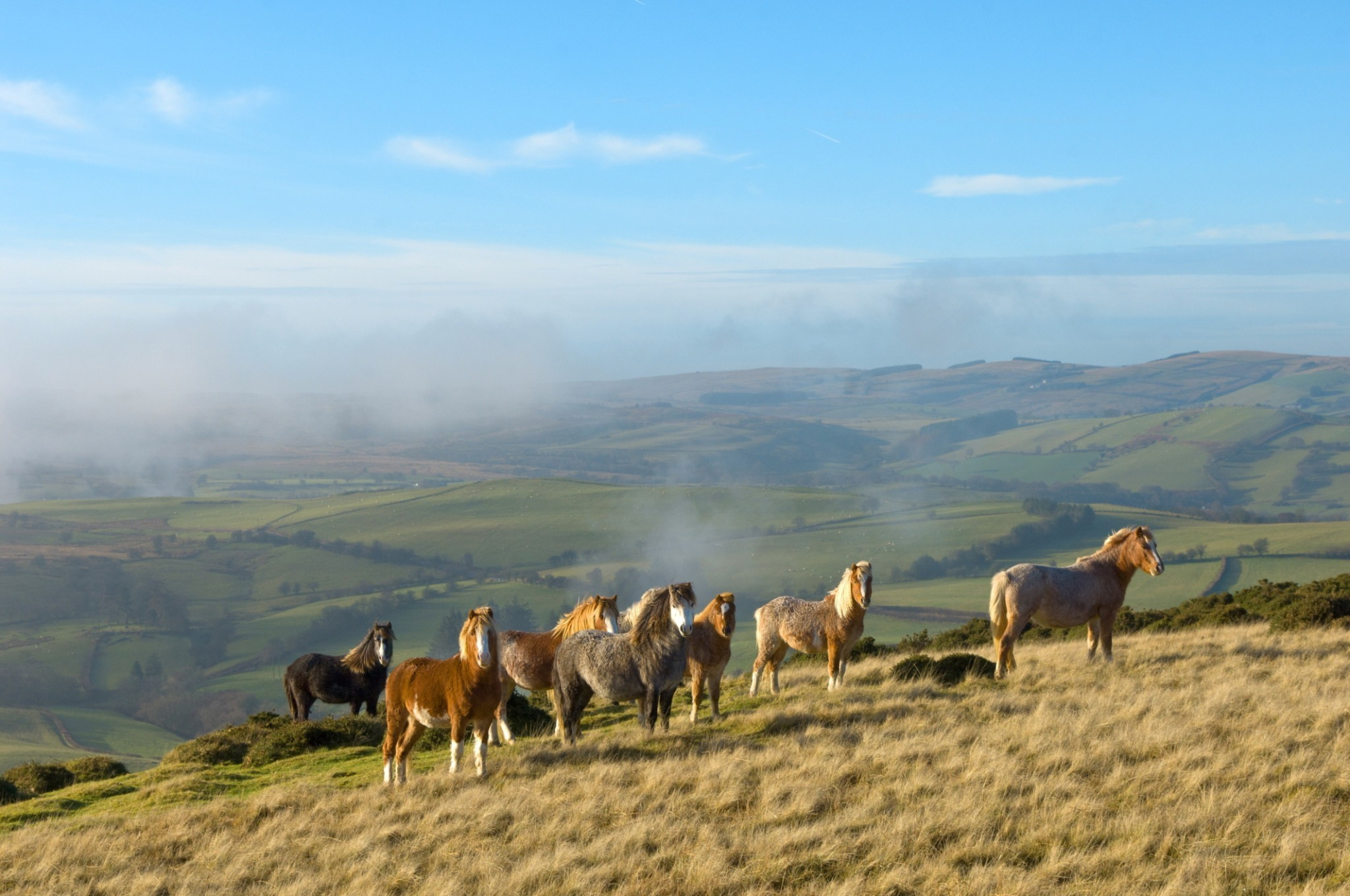 Going back in time in Mid-Wales: eco-tourism in Britain's secret wilderness