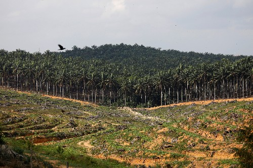 Palm oil in line for weekly gain on stronger U.S. soyoil