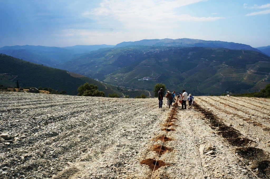 Think you know Douro Valley wines?
