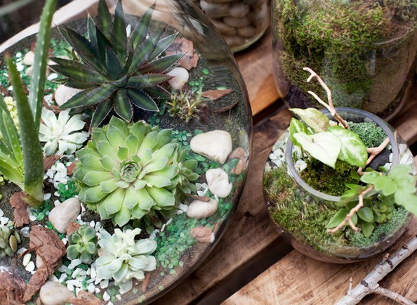 Make It Yourself: The Foolproof Guide to Planting Your Own Terrarium
