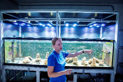 Florida scientists induce spawning of Atlantic coral in lab for first time