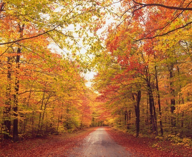Don't Apologize For Your Obsession With Fall. It's Science