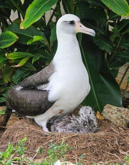 Albatross Internet Darling Takes First Flight