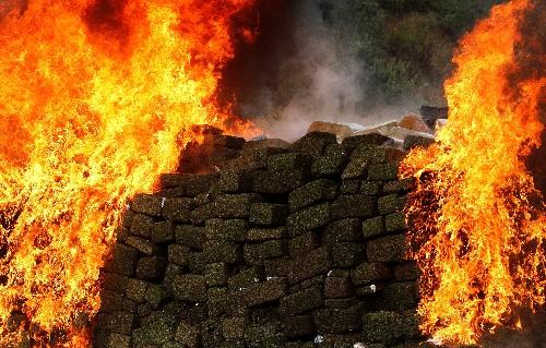 Mexican Senate set to pass bill to legalize marijuana in next few days