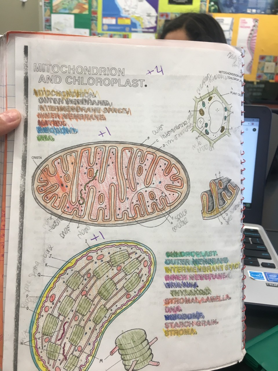 This semester I learned about cell structure and function. Labeling and coloring this cell diagram helped me have a better understanding on the cell and learn more .