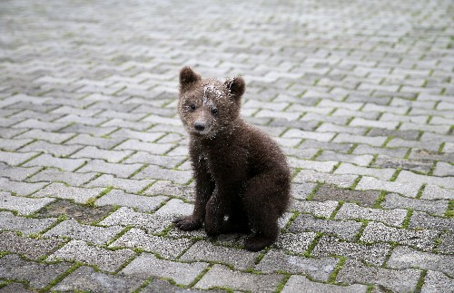 Orphaned bear cub Aida finds refuge in Bosnian village