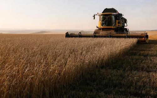 Экспортные цены на пшеницу РФ снизились на прошлой неделе