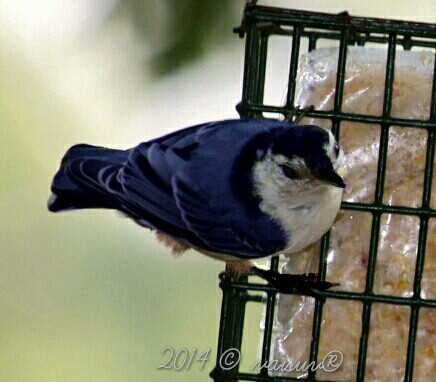 Nuthatch Bird photos . - Magazine cover