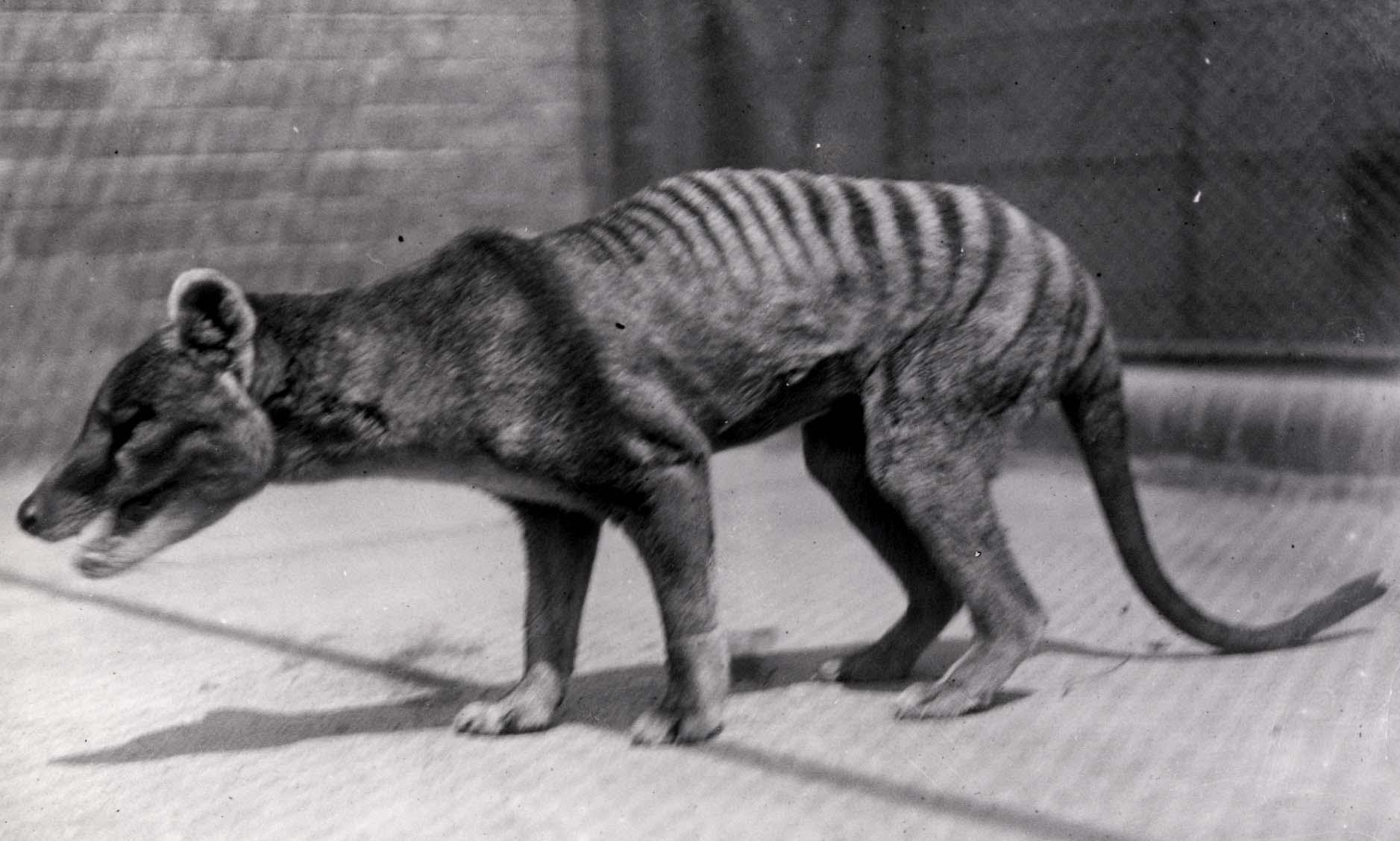Why don't we grieve for extinct species?