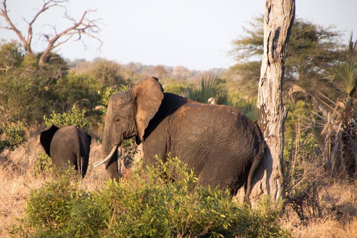 I've got to get this mud off my rear end. Kruger National Park South Africa.