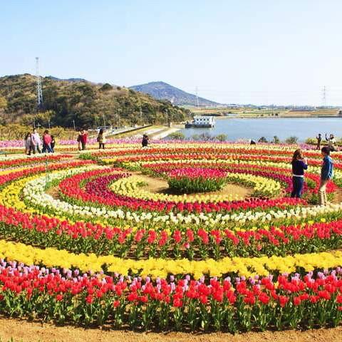 Tulip garden srinagar Kashmir