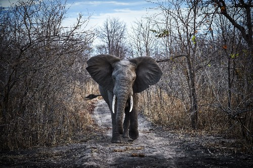 Malawi's wildlife renaissance - Lonely Planet