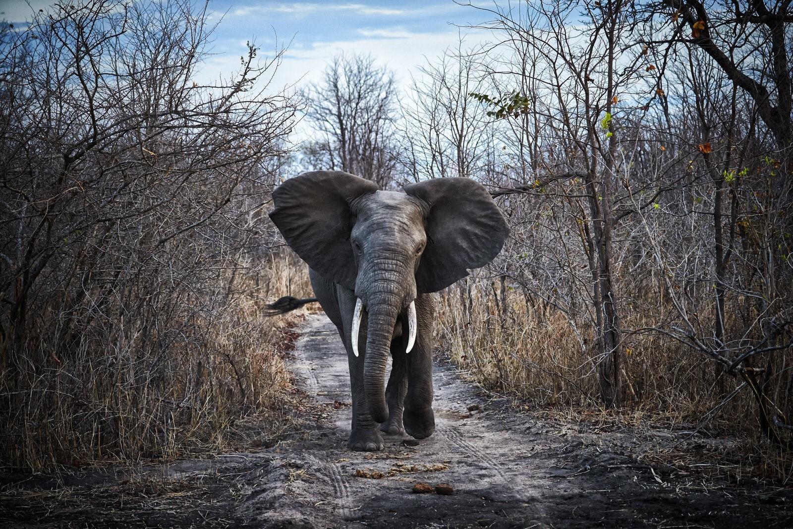 Malawi's wildlife renaissance