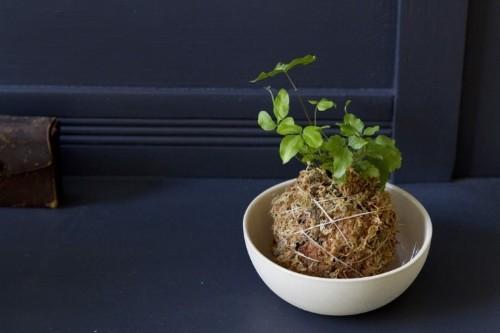 Kokedama String Balls: A DIY Hanging Garden