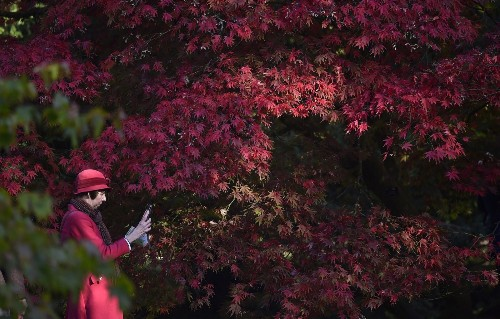 Fabulous Fall Foliage in Full Bloom: Pictures