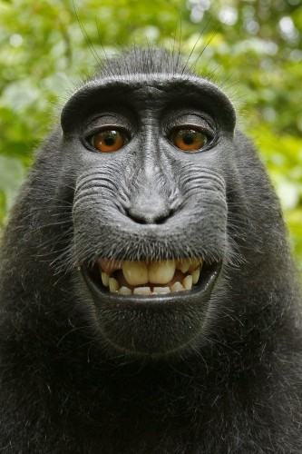 Who owns monkey selfie? Photographer says monkey was like his assistant