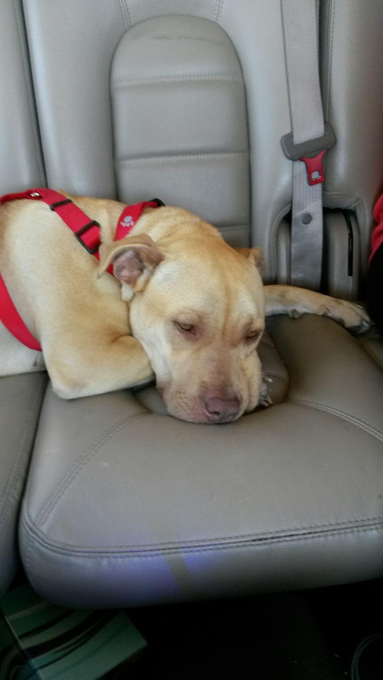 First car ride