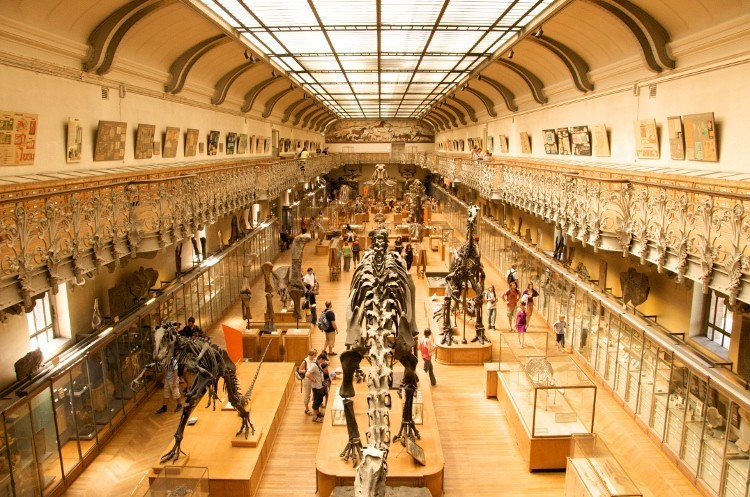 From Disneyland to art treasure hunts: top tips for Paris with kids