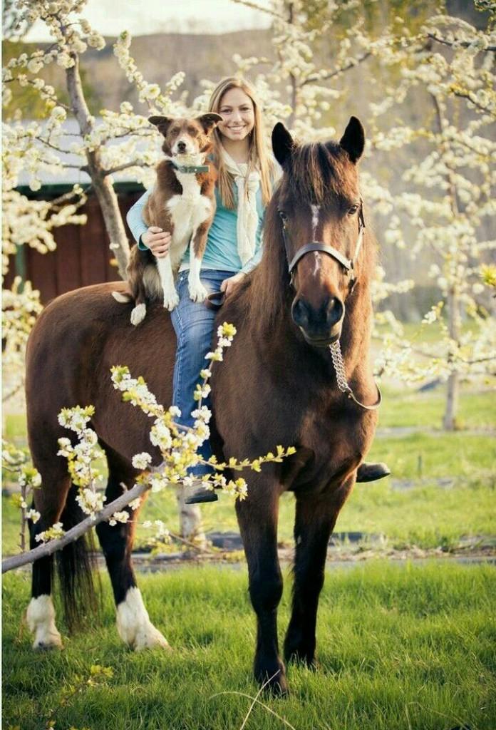 Horses - Magazine cover