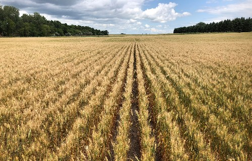 Brazil import quota for U.S. wheat could come with Bolsonaro visit: source