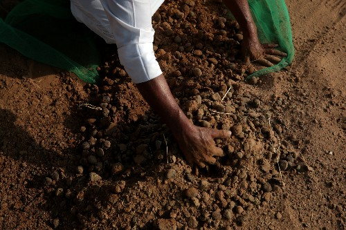 Camel dung fuels cement production in northern UAE