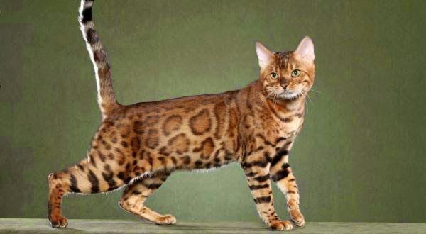 Olha que coisa linda essa gato! !