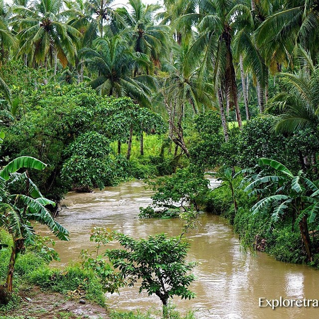 Lost in the Jungles Splendor of Agas Agas Leyte in the Philippines