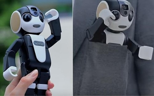 RoBoHoN is the world's cutest smartphone - and he's poised to take over the world