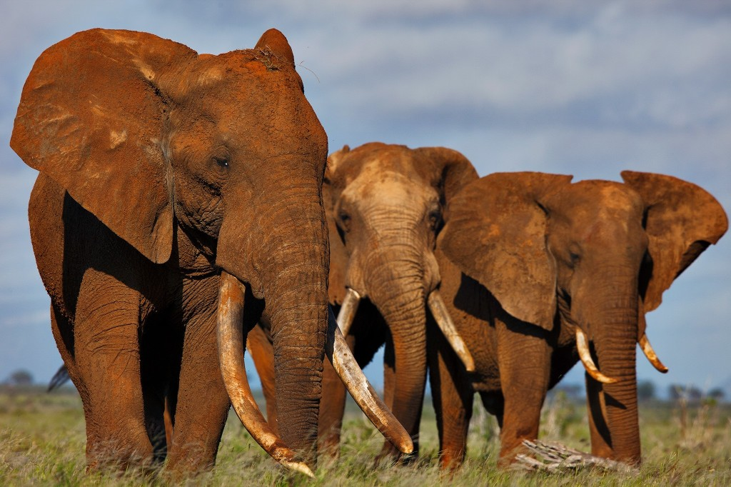 China to Shut Down Its Ivory Trade by the End of 2017