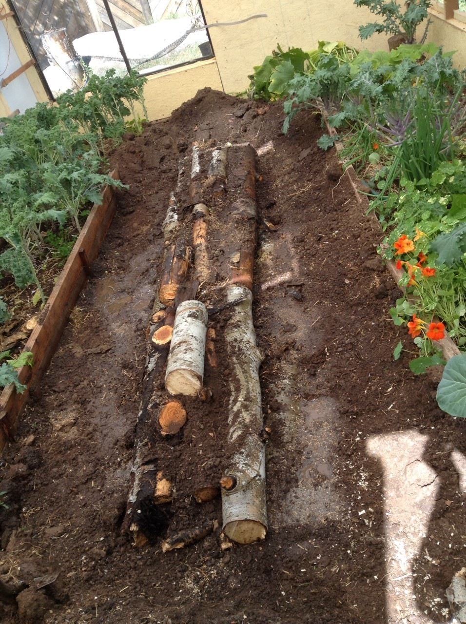 i placed these aspen logs in a shallow trench , then put the soil from the dug out trench over the logs