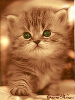 Cute Blinking Kitty - Cover