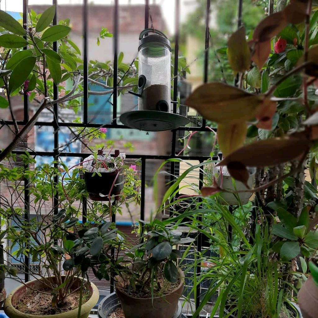 Indoor Gardening  - cover