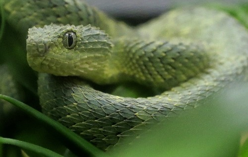 UN health agency seeks to halve number of snakebite deaths