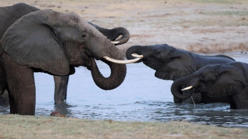 Illegal ivory trade driven by China demand