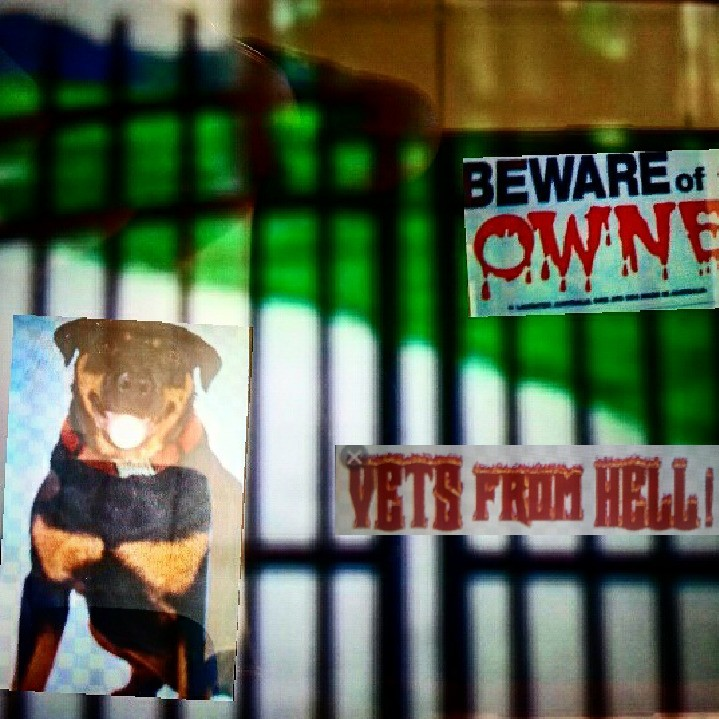 Vets / owners from hell - Magazine cover