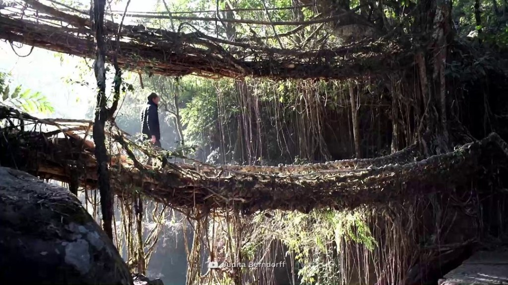 The Incredible Living Root-Bridges of India