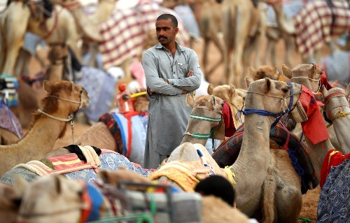 Camel Racing in Dubai: Pictures