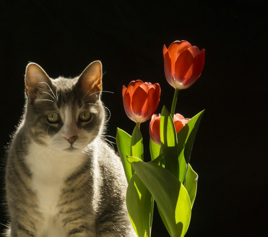 Kediler Ve Çiçekler - Magazine cover