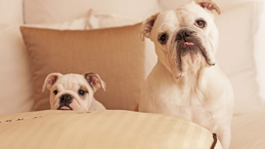 America's most luxurious pet-friendly hotels