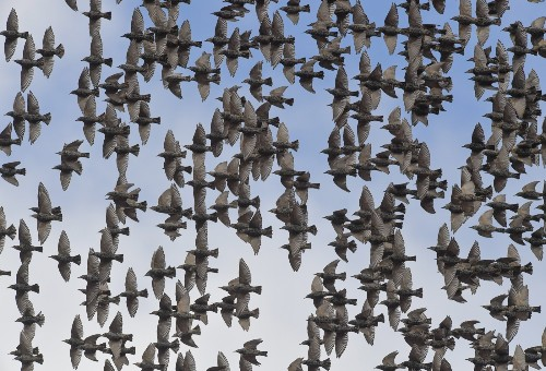 Migratory Birds Heading South for the Winter: Pictures
