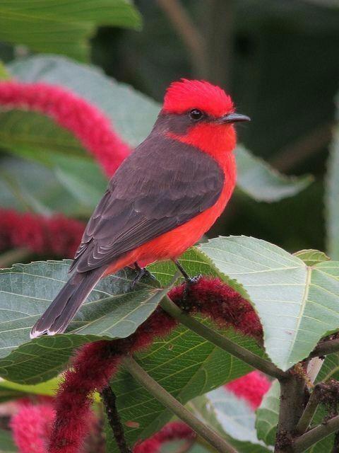 Bird - cover