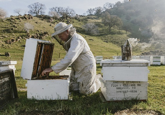 Even more than honey bees, beekeepers are on endangered-species list