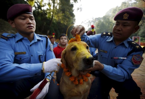 Tihar Festival Celebrates Dogs in Nepal: Pictures